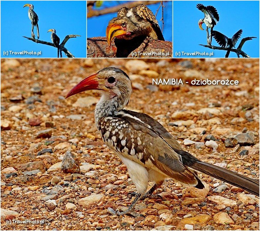 Piękne ptaki  - dzioborożce