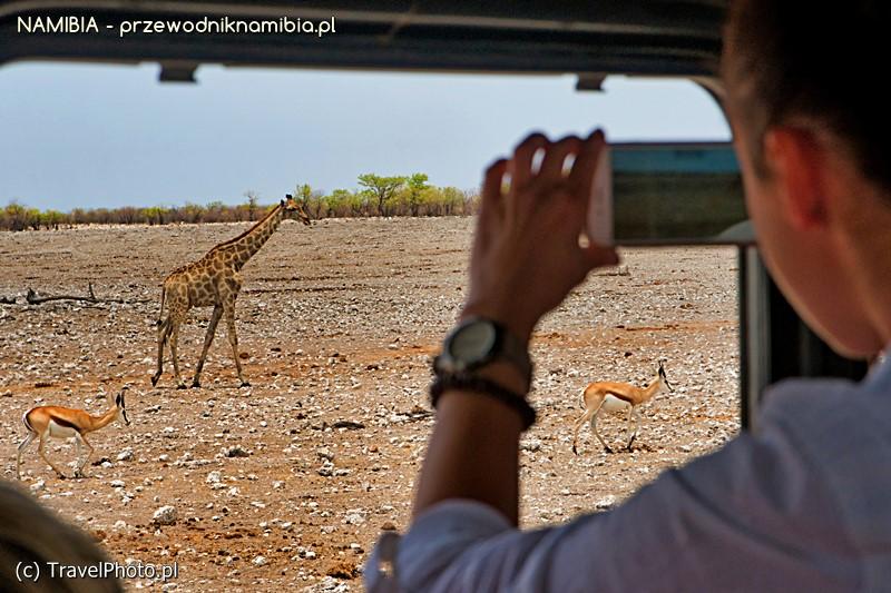 Właściwe zachowanie na safari pozwala na lepszy kontakt ze zwierzętami.