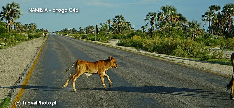 Z powodu nagle wyskakujących zwierząt, ta droga jest naprawdę niebezpieczna!