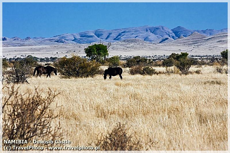 <em><strong>TAK! Są nadal dzikie konie! Na koniec posta zdjęcie je pokazujące!</strong></em>