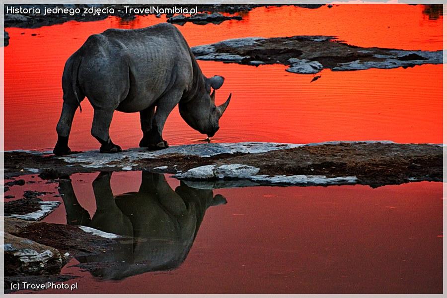 Ostatni nosorożec - Historia jednego zdjęcia
