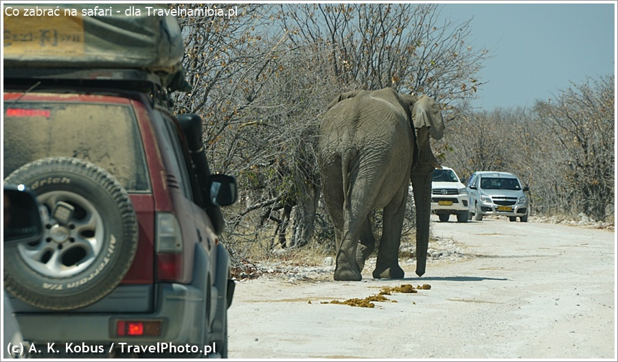 Życzymy Ci pięknych spotkań ze zwierzętami w Namibii!