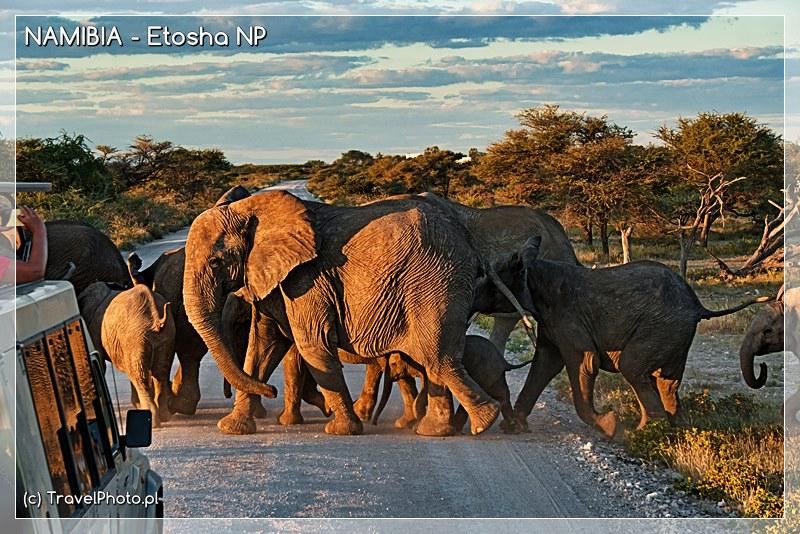 Słonie kilka kilometrów od campingu