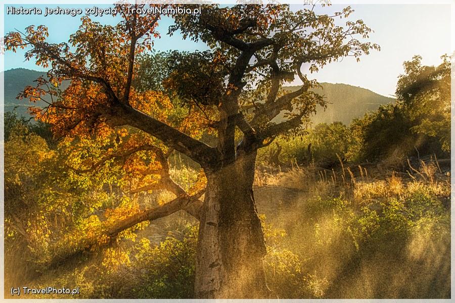 NAMIBIA. Obraz baobabu - Historia jednego zdjęcia - TravelNamibia.pl