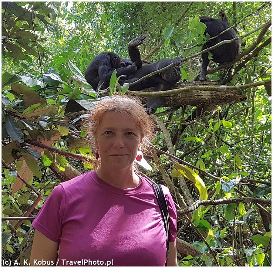 Uganda: goryle we mgle, turyści w błocie, a szympansy na drzewach :D