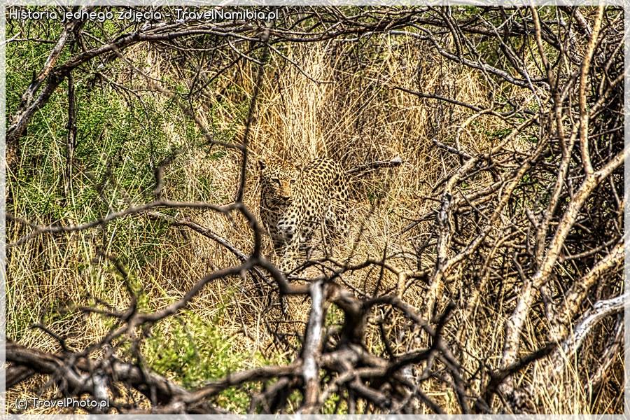 Namibia, AFRICAT - lampart