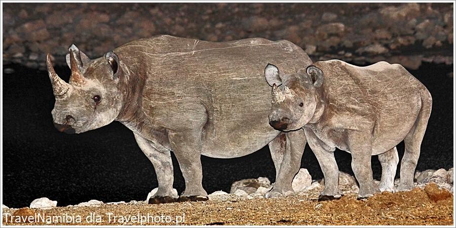 Nosorożce przy oczku wodnym.