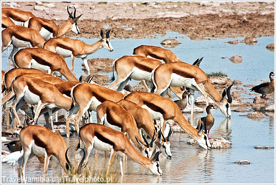 Przy oczkach wodnych w porze suchej bywa spora ilość zwierząt.