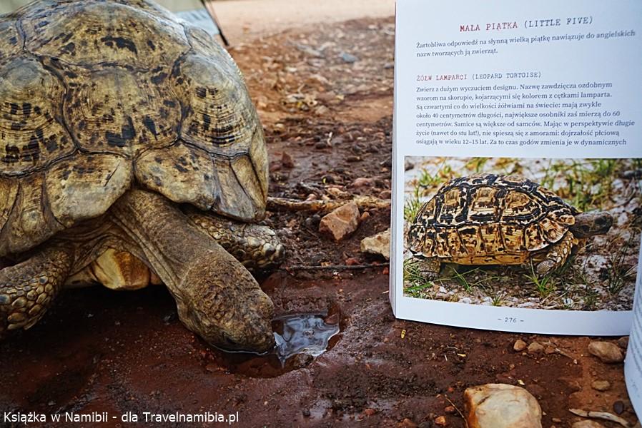 Żółw lamparci - atlas roślin i zwierząt przydaje się w podróży!
