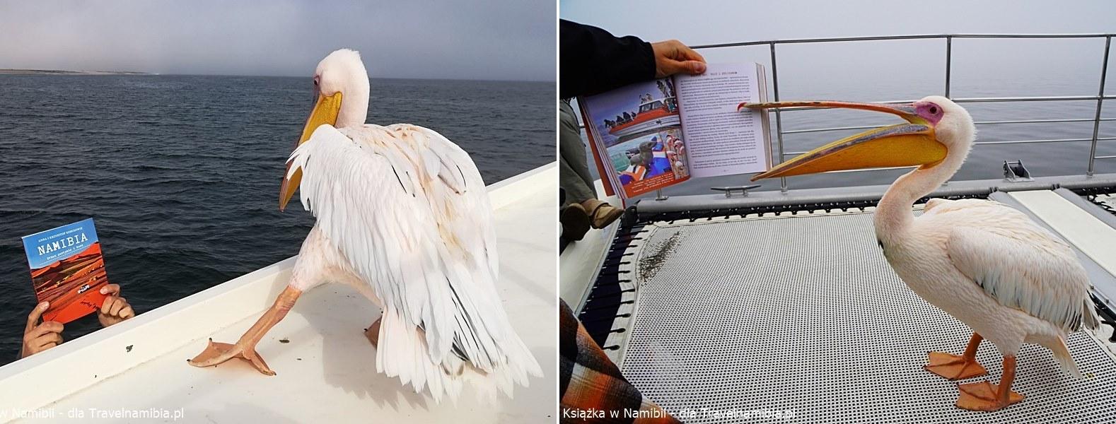 Jeden pelikan z nieśmiałością, drugi ma apetyt na czytanie!