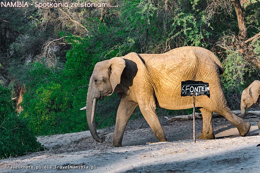 Słonie na campingu w Puros.
