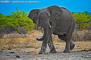 Słonie – instrukcja obsługi
