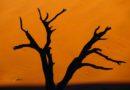 Dead Vlei – 5 praktycznych info o słynnej dolinie