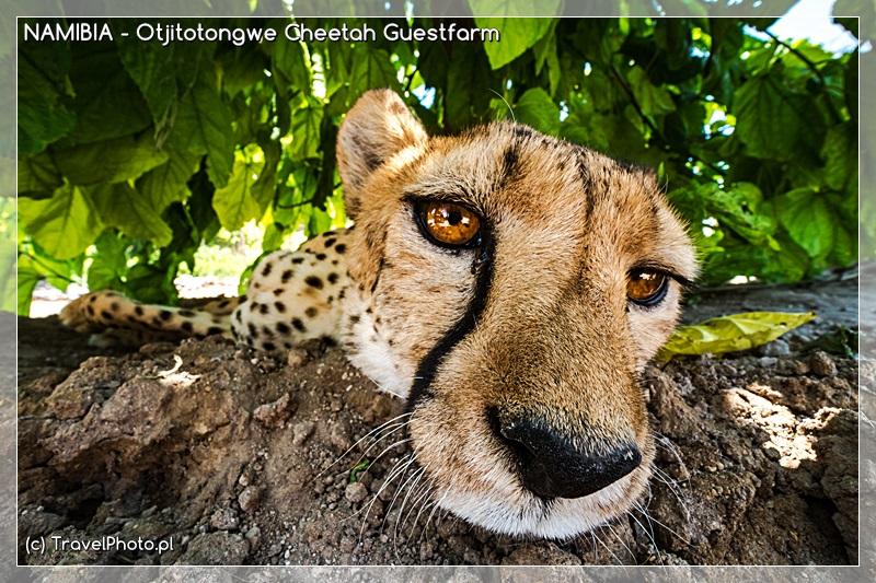 Otjitotongwe Cheetah Guestfarm