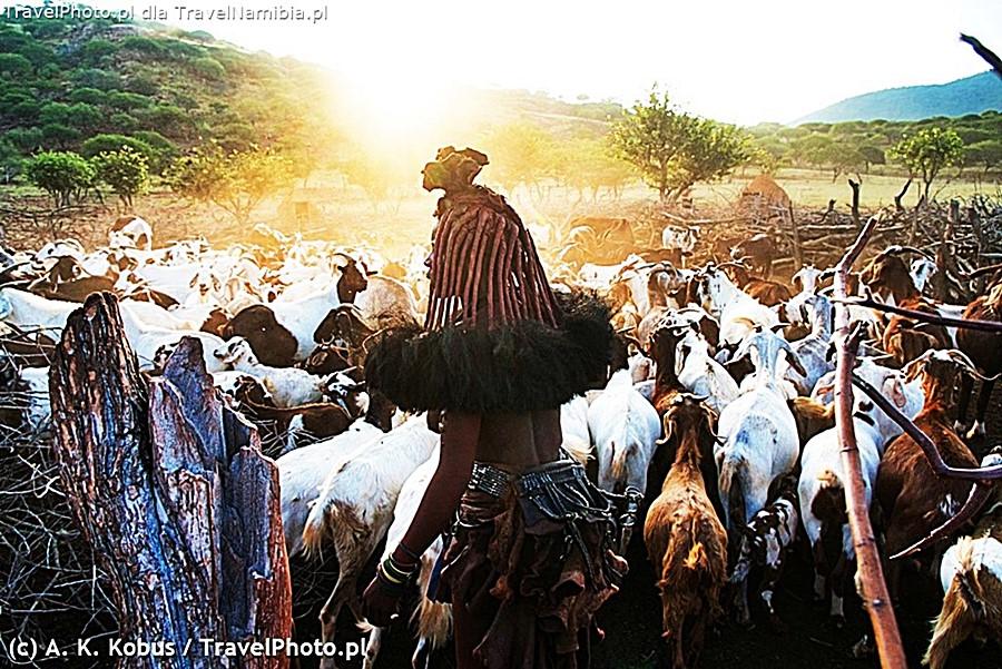 W porze deszczowej czasem udaje się zobaczyć krowy w kralu.