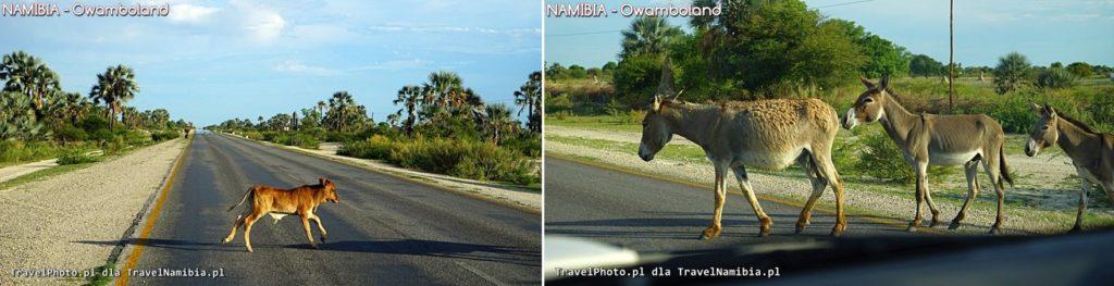 Jak widać na drodze jest spory ruch!