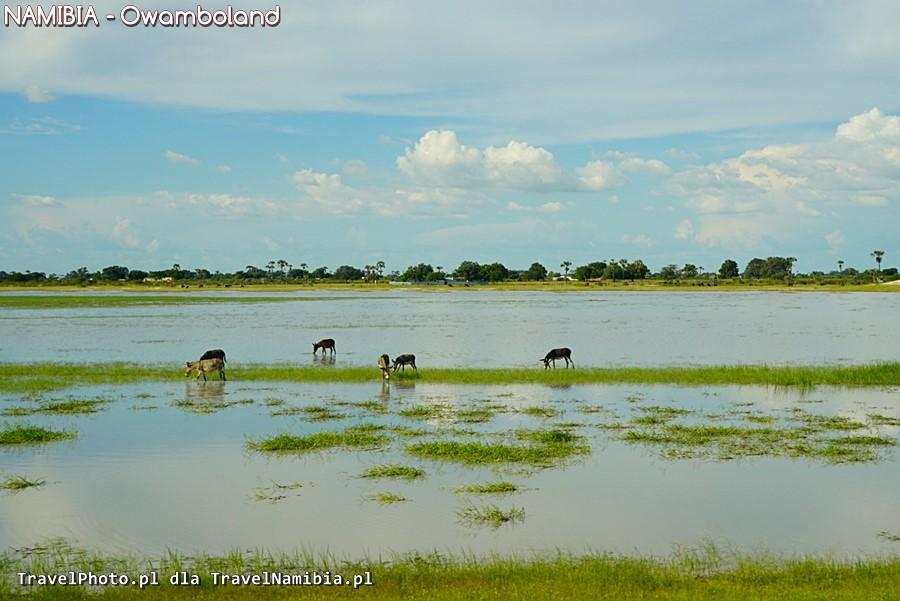 Owamboland - krajobrazy przy drodze.