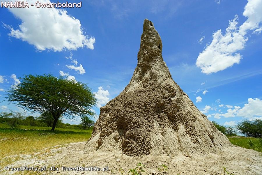 Tutejsze termitiery bywają ogromne!