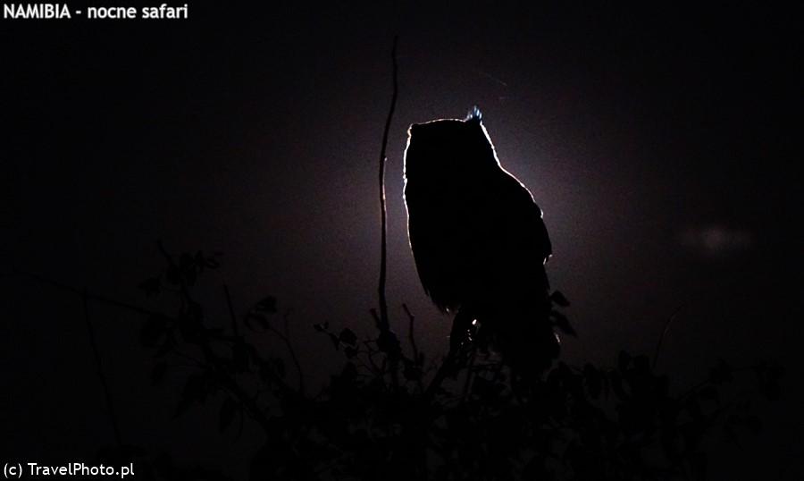 Sowa - strażniczka nocy.
