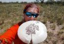 Omajova – grzyby z termitiery