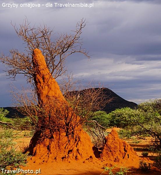 Gdy termitiera powstaje wokół drzewa - zabija je.