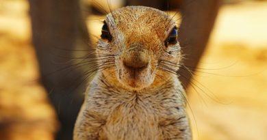 Solitaire – ciekawskie wiewiórki na wyciągnięcie ręki