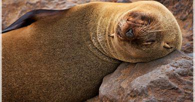 10 zwierząt wartych zobaczenia w Namibii