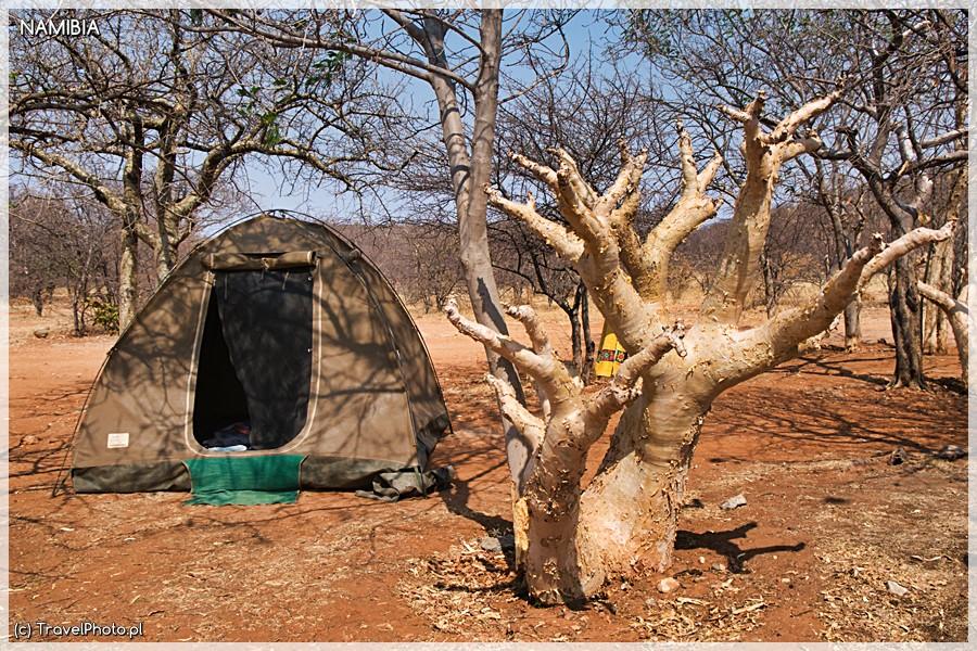 Otjitotongwe ma piękne drzewa maślane.