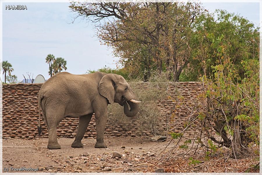 Ten słoń w nocy przyszedł między namioty...
