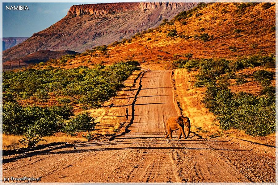 Pustynny słoń - droga do Palmwag.