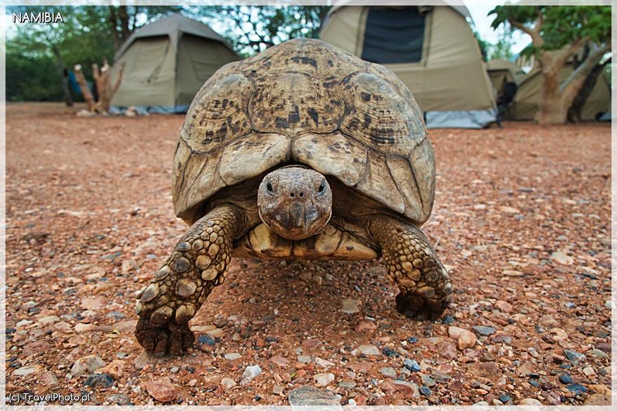 Otjitotongwe - wizytacja na campingu!