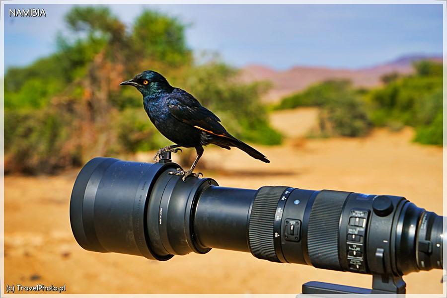 Purros ptaki na wyciągnięcie obiektywu!