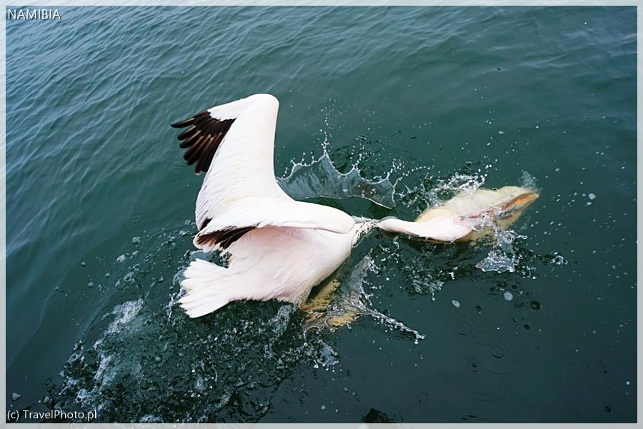 Bardzo dziwna ewolucja w wodzie!