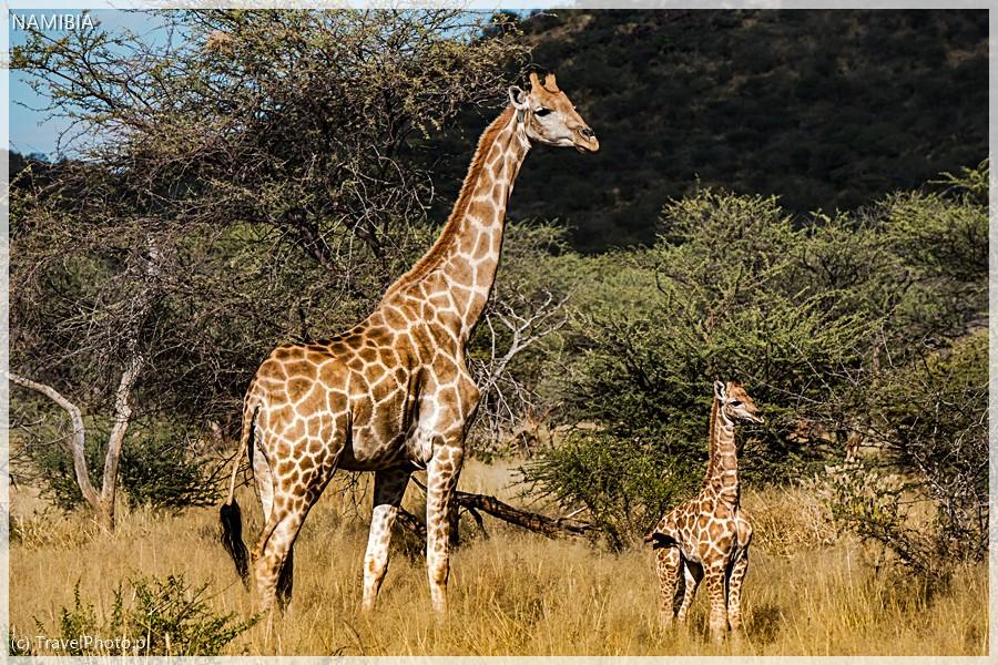 Mama i dwutygodniowy maluch - Erindi, Namibia.