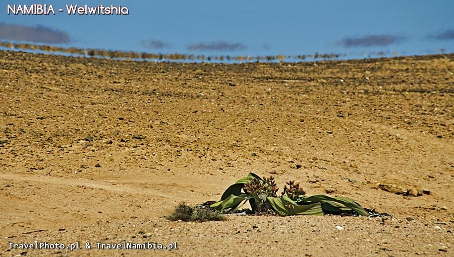 To nie jest kraj dla słabych roślin! Okolice Messum Crater.