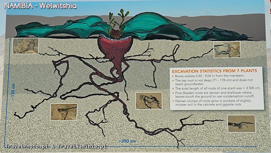 Plansza edukacyjna na szlaku Welwitschia Plains.