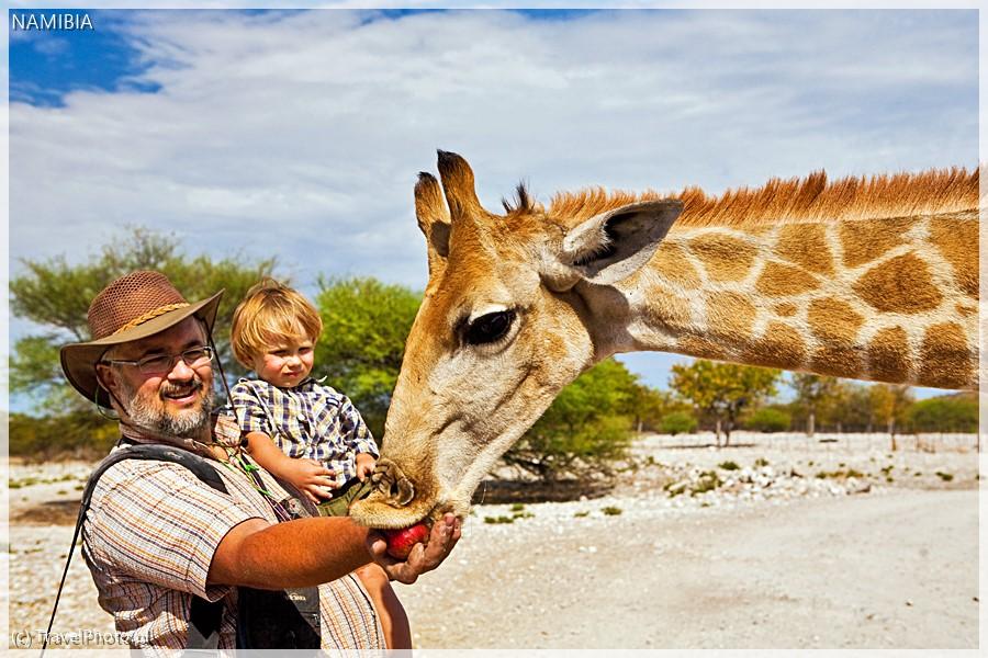 Oswojona żyrafa na farmie w Namibii: ma roczek!