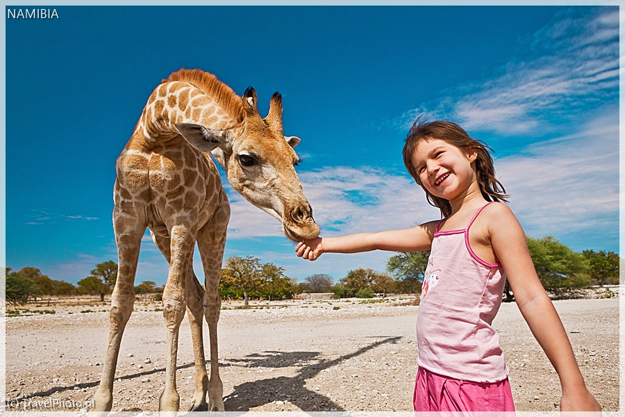 Roczna żyrafa ma trzy metry!