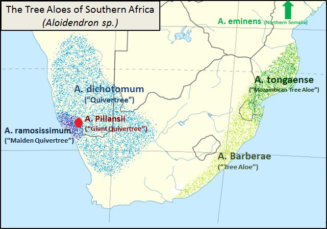 Drzewa aloesowe w Afryce (źródło: Wikipedia)
