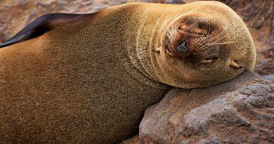 Uchatki – zaskakujące ciekawostki