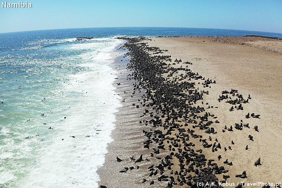 Wybrzeże Atlantyku - w niektórych miejscach są ogromne kolonie uchatek.