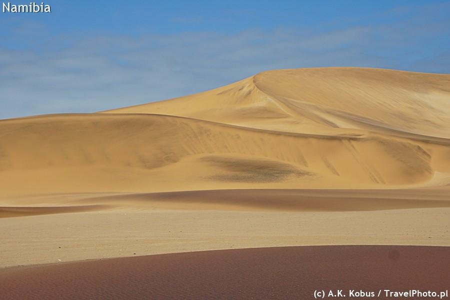Pustynia nigdy nie jest pusta - trzeba tylko umieć dostrzec tu życie.