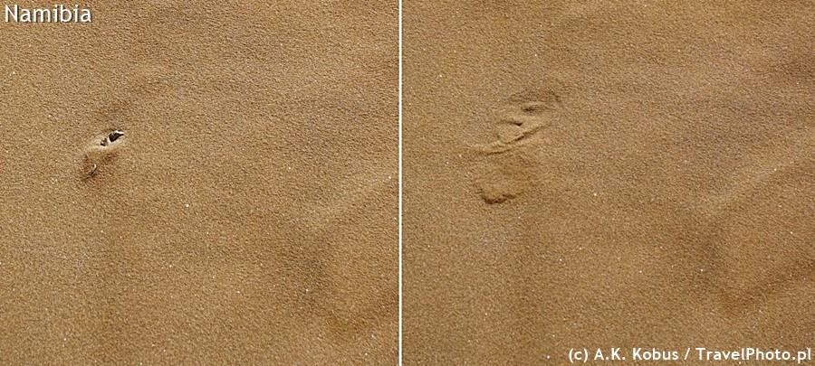Piaskonurki błyskawicznie zakupują się w piasku.
