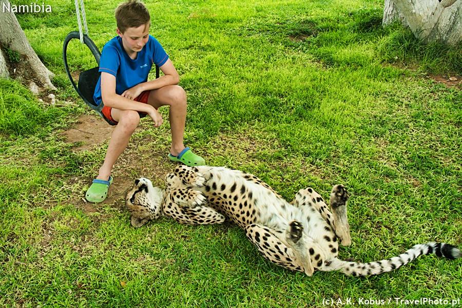 Na Cheetach Farm jesteś BARDZO blisko gepardów!