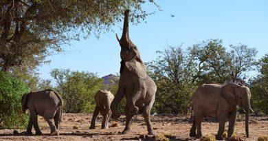 EHRA. Wolontariat ze słoniami – konkretna pomoc