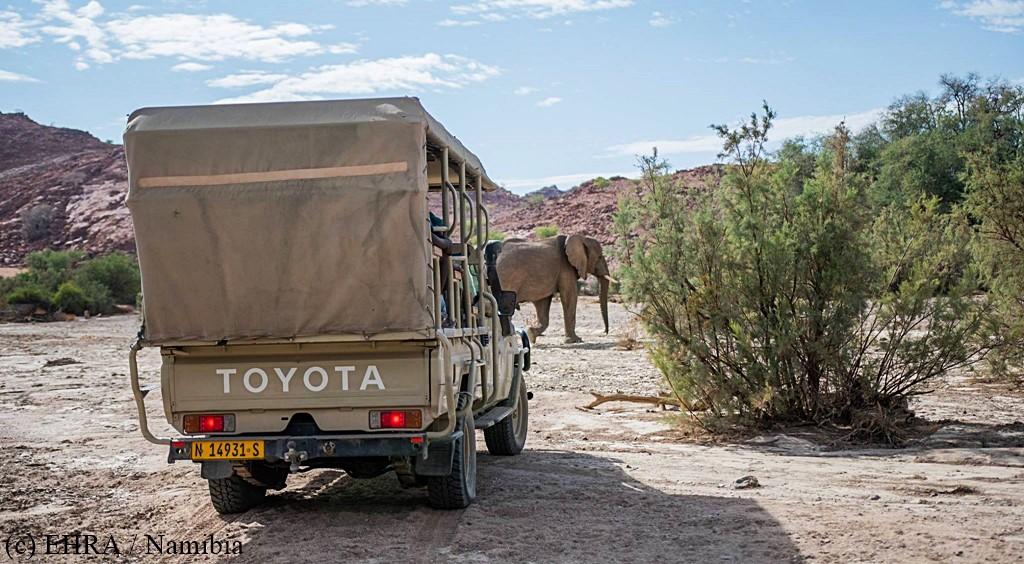 Spotkanie ze słoniem.