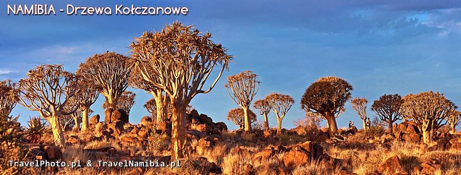 Las drzew kołczanowych - jedyne takie miejsce na świecie!