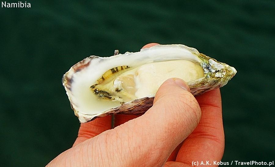 Baby oyster - całkiem spora jak na malucha.