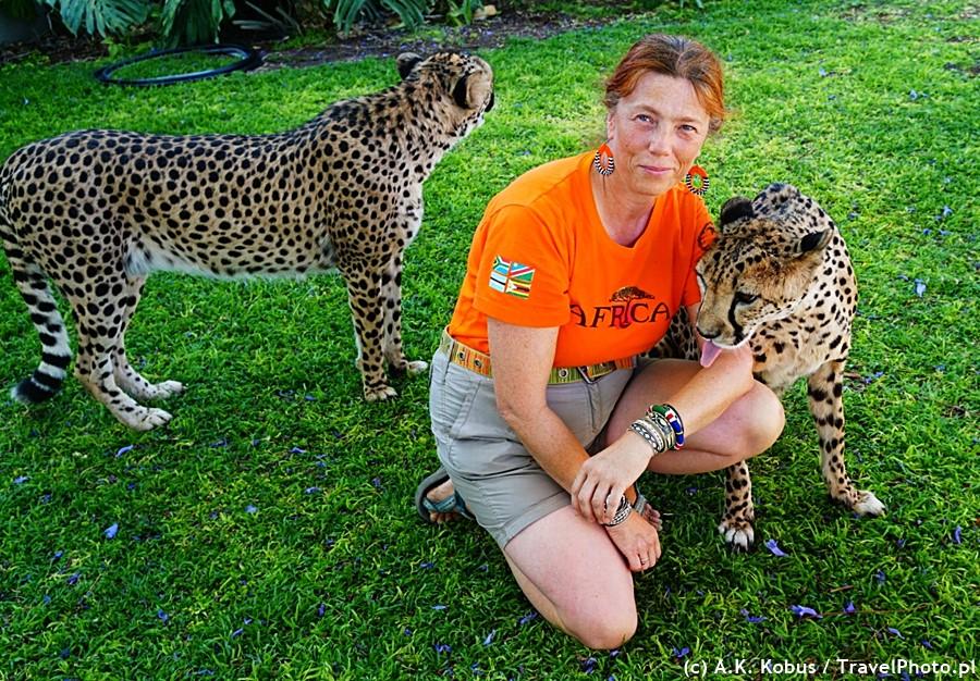 Bliskie spotkanie z gepardami.
