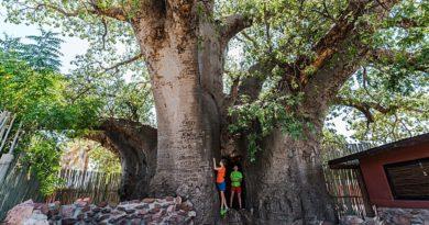 Ombalatnu i największe baobaby Namibii